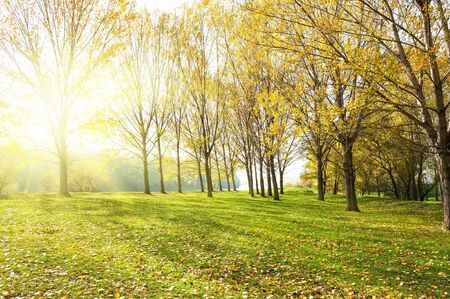 Sunny forest in autumn photo