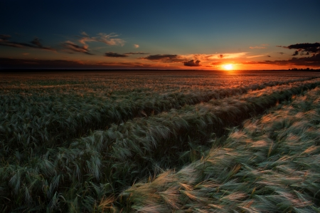 evening in wheat field. summer landscape photo