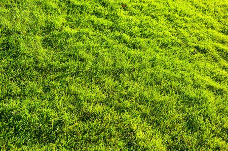 sunny green grass background photo