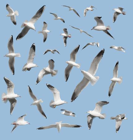 wingspread: bird on sky background