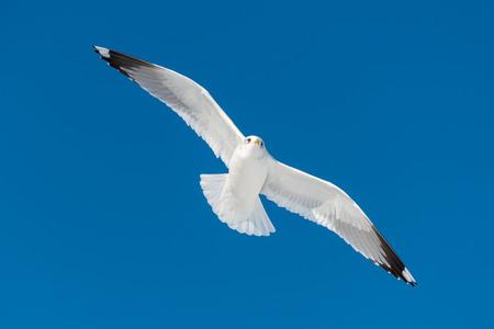 white bird: one white bird flies