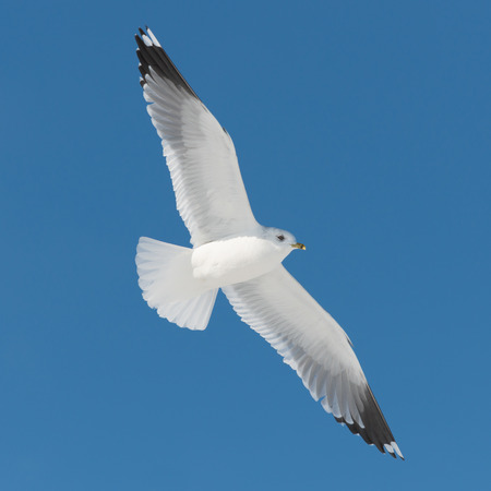 white bird flies on blue sky