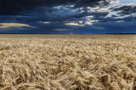 dark dramatic field and sky landscape photo