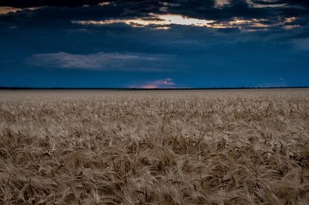 evening field and dark sky landscape photo