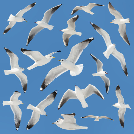 white bird collection on sky background photo