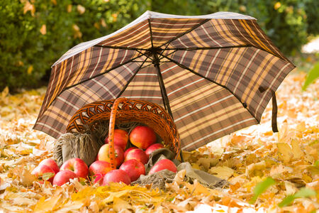 basket with apples under umbrella on autumn leaves photo