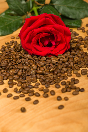 red rose on coffee seeds and wooden background photo