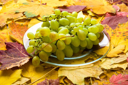 grape on autumn leaves background photo
