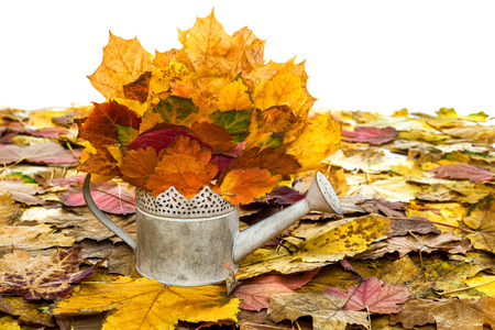 bailer: bailer with autumn leaves isolated on white Stock Photo
