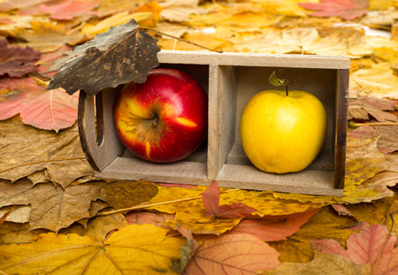 apples in crate on autumn leaves background photo