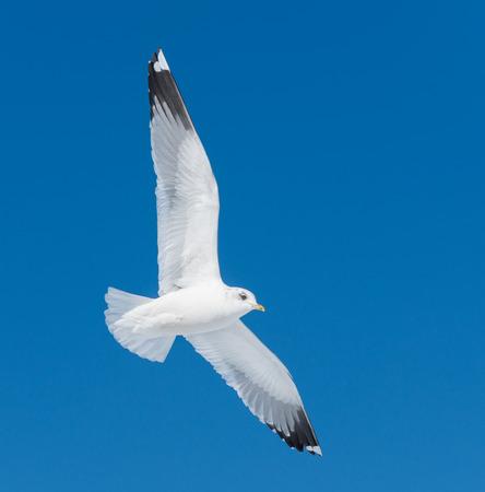 oiseau mouche: grosse mouche blanche des oiseaux sur le ciel Banque d'images