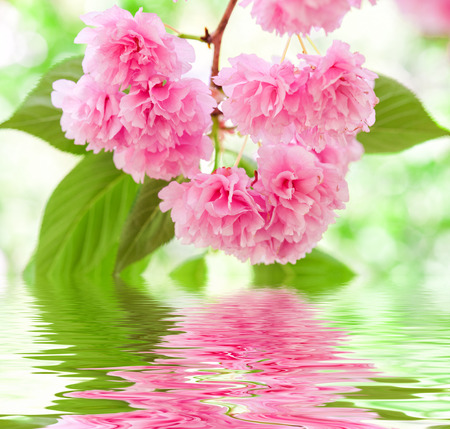 pink flower reflected on water