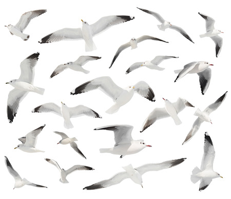 bird beaks: white bird set isolated Stock Photo