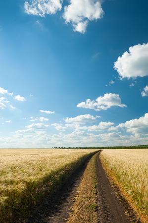 the sky clear: carretera de tierra en el campo de trigo. paisaje de verano