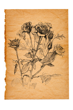 flower sketch on old paper background Stock Photo