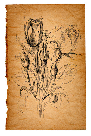 paper and pen: flower sketch on the old paper background