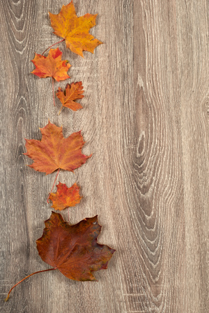 leaves frame: colorful autumn leaves frame on wooden background Foto de archivo