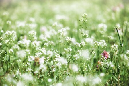 afield: summer landscape, green meadow with flowers closeup