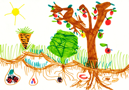 child's drawing: childs drawing on paper. kitchen garden