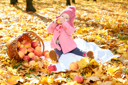 apples basket: girl child in autumn park with apples basket, beautiful landscape in fall season with yellow leaves