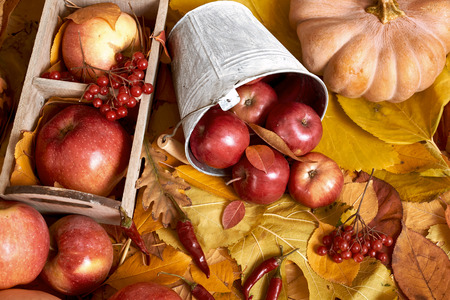 autumn background, fruits and vegetables on yellow fallen leaves, apples and pumpkin, decoration in country style, brown toned
