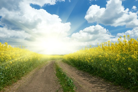 Ground road in yellow flower field with sun, beautiful spring landscape, bright sunny day, rapeseed Stock Photo