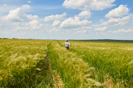 child run through the wheat field, bright sun, beautiful summer landscape