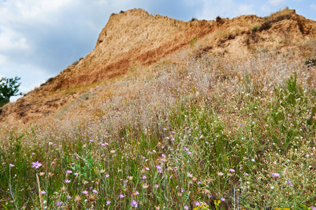 wildflowers on high coast by the sea, beautiful summer landscape, travel concept