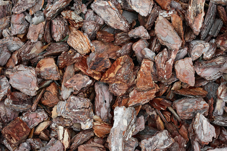pieces of wood bark for background or texture Banque d'images