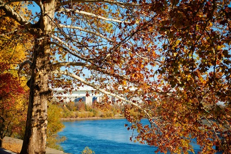 Beautiful trees in the autumn season. The bridge and the river are in the city.