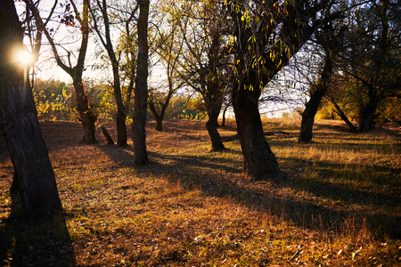 beautiful trees in the autumn forest, bright sunlight at sunset Archivio Fotografico