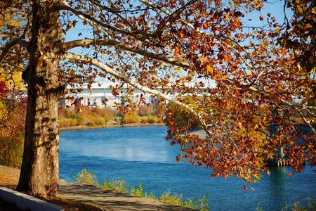 Beautiful trees in the autumn season.