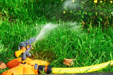 Sprinkler head of automatic watering the bush, grass and lawn. Spraying water over green grass. Irrigation system Imagens