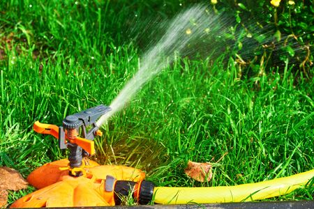 Sprinkler head of automatic watering the bush, grass and lawn. Spraying water over green grass. Irrigation system Stockfoto