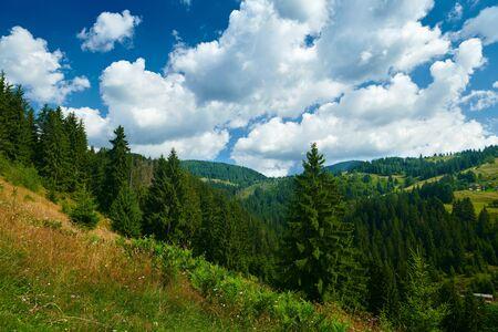 beautiful summer landscape, spruces on hills, cloudy sky and wildflowers - travel destination scenic, carpathian mountains Reklamní fotografie