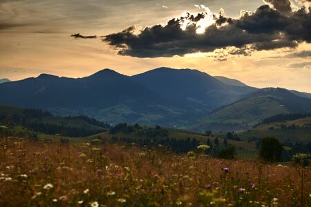 Golden sunset in carpathian mountains - beautiful summer landscape, spruces on hills, dark cloudy sky and bright sun light, meadow and wildflowers