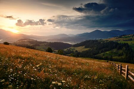 wildflowers, meadow and golden sunset in carpathian mountains - beautiful summer landscape, spruces on hills, dark cloudy sky and bright sunlight Stok Fotoğraf