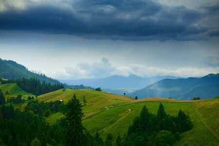dark stormy sky in carpathian mountains, wildflowers and meadow, spruces on hills, beautiful nature, summer landscape