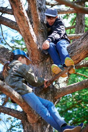 Girl and boy playing outdoor, climbing a tree, bright sunlight, beautiful day