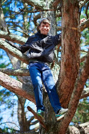 Teenage boy playing outdoor, climbing a tree, bright sunlight, beautiful day