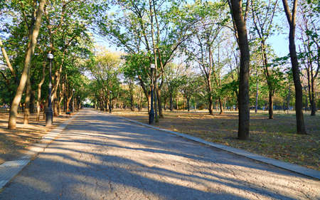 nature, trail in the city Park early in the morning, bright sunlight and long shadows of trees Zdjęcie Seryjne