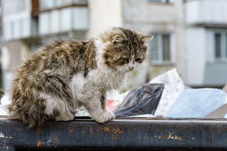 stray cats search for food in a dumpster