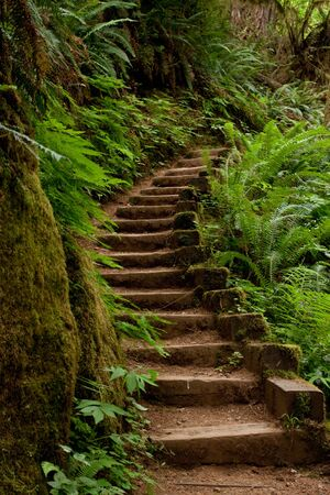 Stairs going up in Oregon wilderness