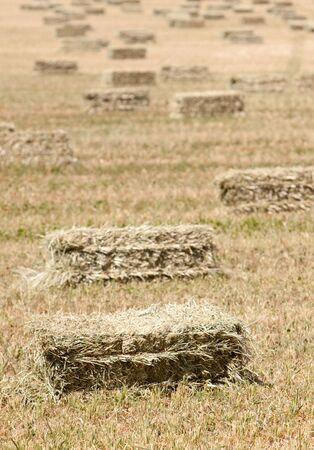 Pajares en el campo  Foto de archivo - 6559193