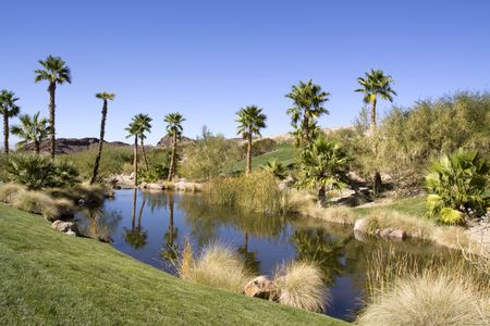 desert oasis: Pond and palm trees in desert oasis Stock Photo