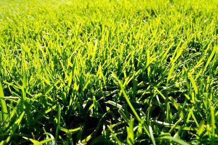 cut grass: Fresh cut green grass in spring time