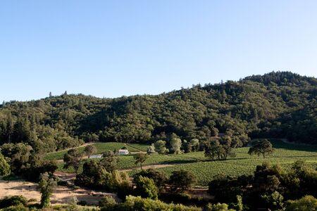 napa valley: Scenic view of a Napa Valley vineyard