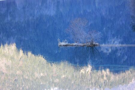 tress: tress reflection on water Stock Photo