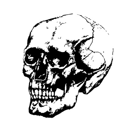 Black and white image of the skull, painted by hand. Illustration
