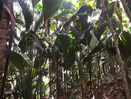 seychelles: valle de mai seychelles